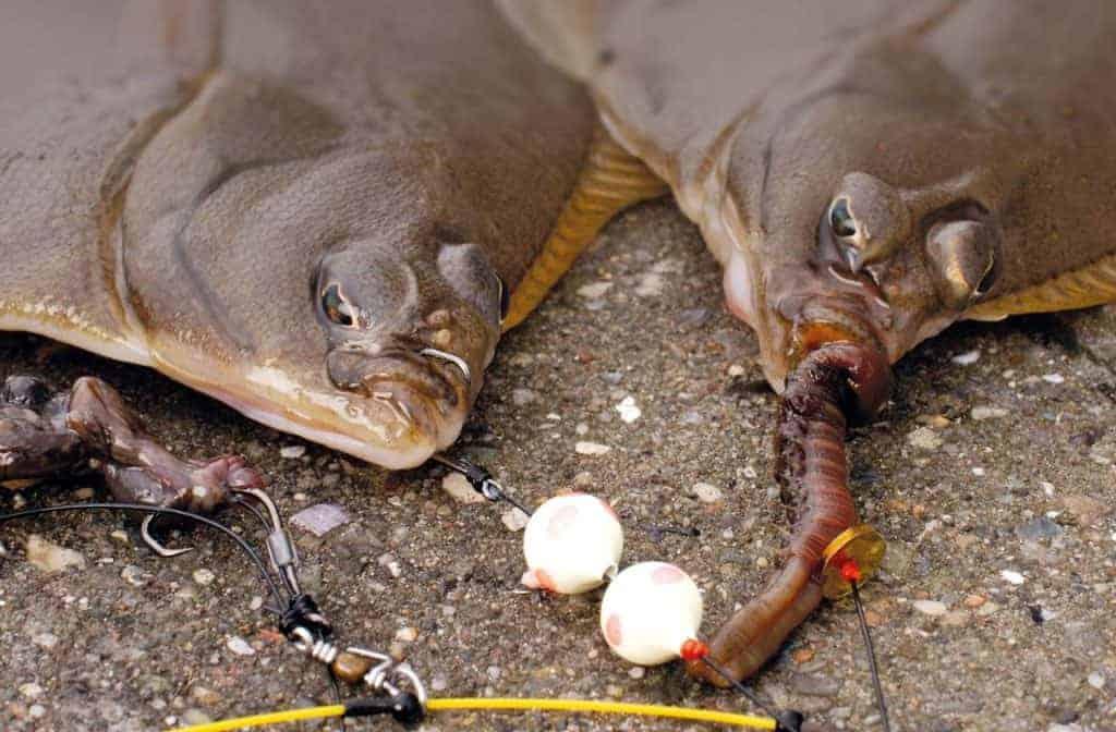 Mole Fiskeri