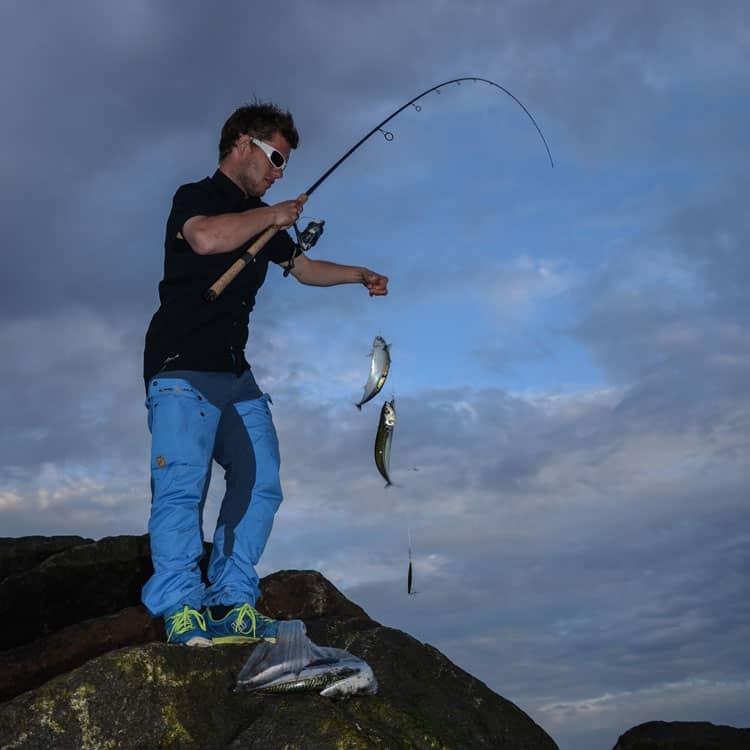 Fiskeri efter makreller