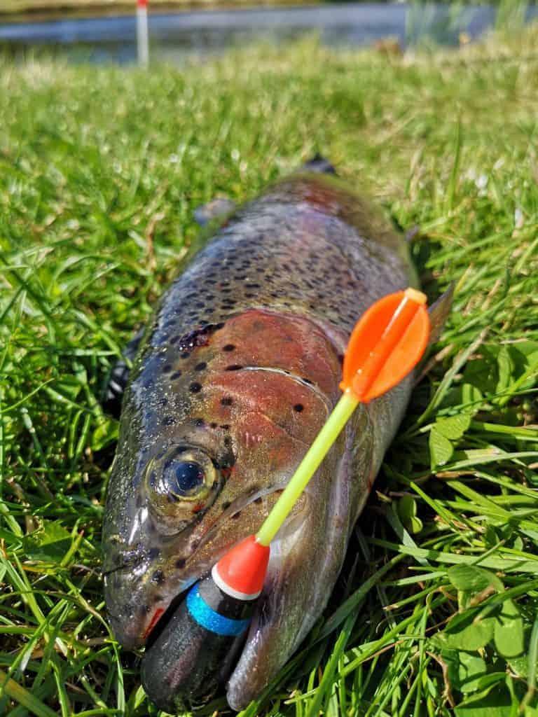 Fisk fanget med bombarda flåd