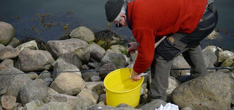 Fiskeri efter sild