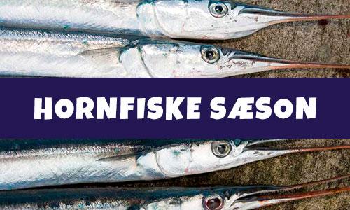 Hornfiske sæson
