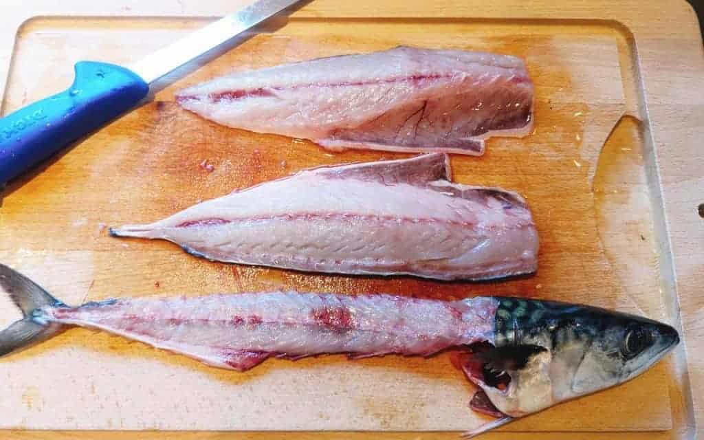 filetering makrel