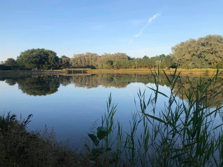 Stauning fiskesø put & take