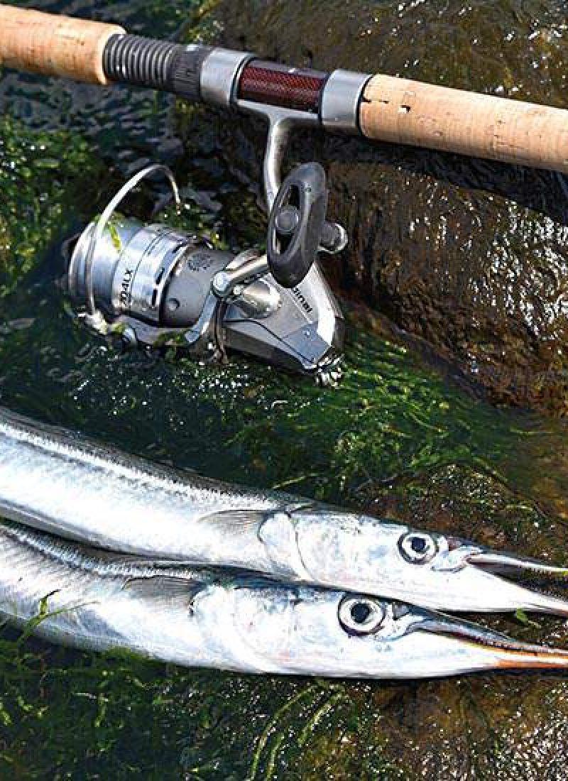 Flotte Hornfisk